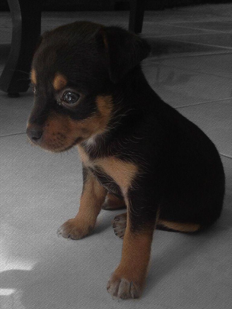 Lilo doggie