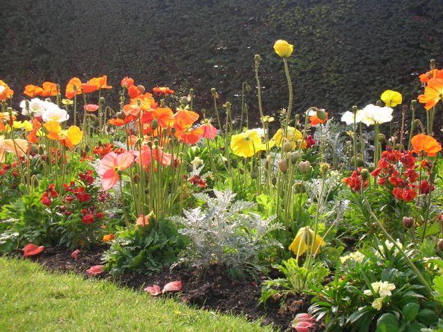 id es de plantes et plan de cr ation pour un massif de printemps tr s lumineux et facile vivre. Black Bedroom Furniture Sets. Home Design Ideas