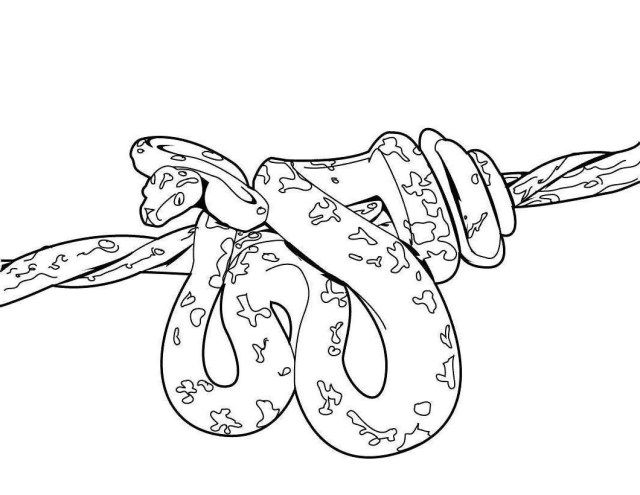 27 Great Photo Of Snake Coloring Page Snake Coloring Pages