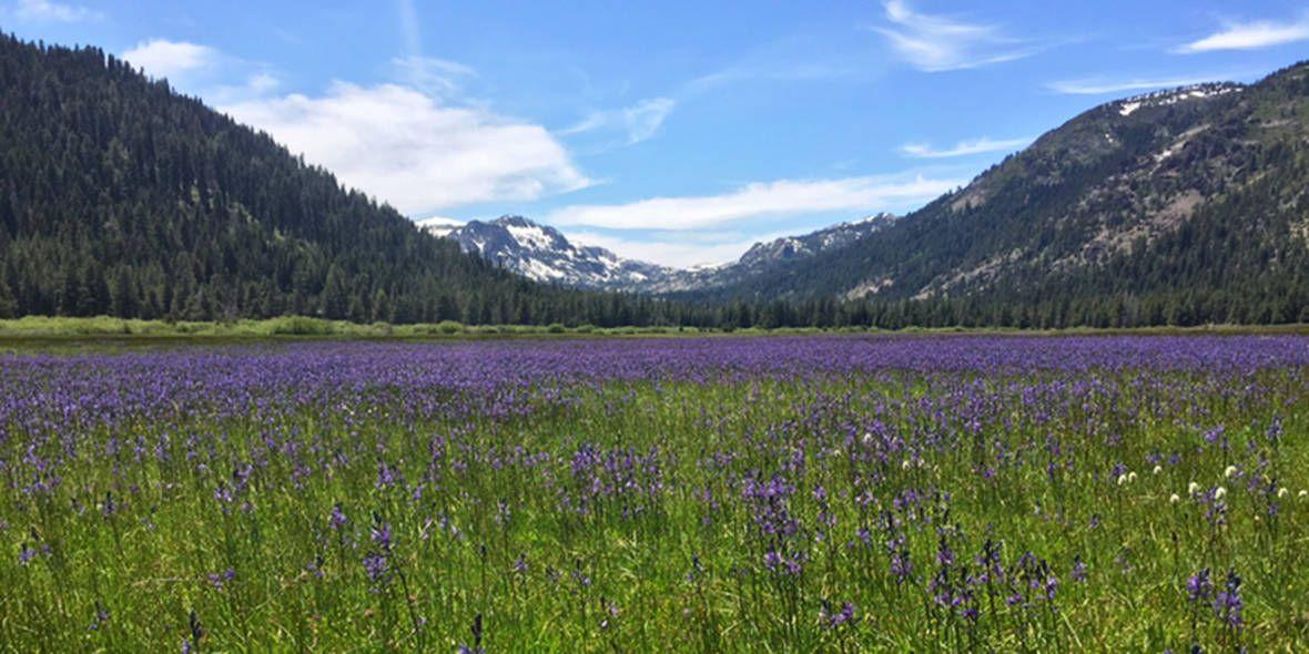 A Tahoe 'Secret Garden' Opens After a Century Secret