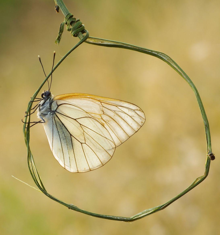 Photograph Iscrizione della farfalla nel cerchio by stefano botticella on 500px