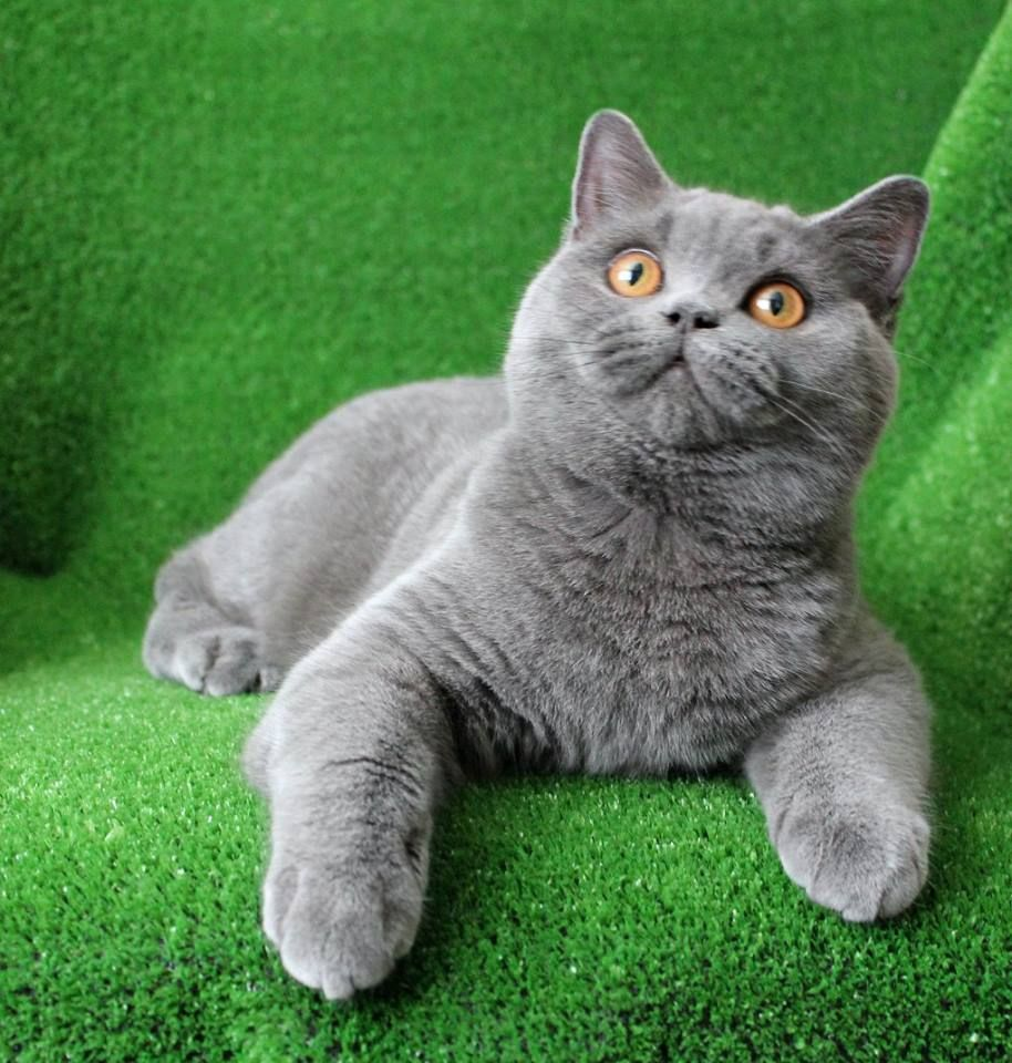 Wideeyed kitten Cats and kittens, Cute cats and kittens