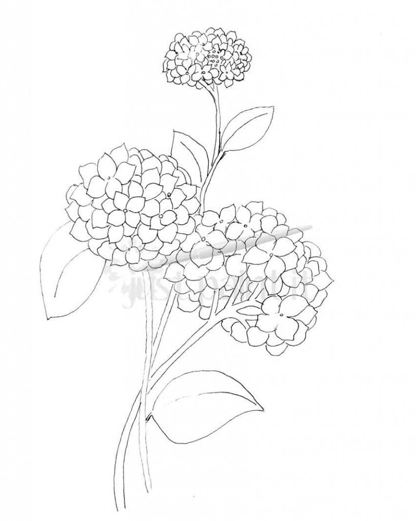Hydrangea And Peonies Coloring Pages Flower Coloring Pages Coloring Pages Hydrangea Colors