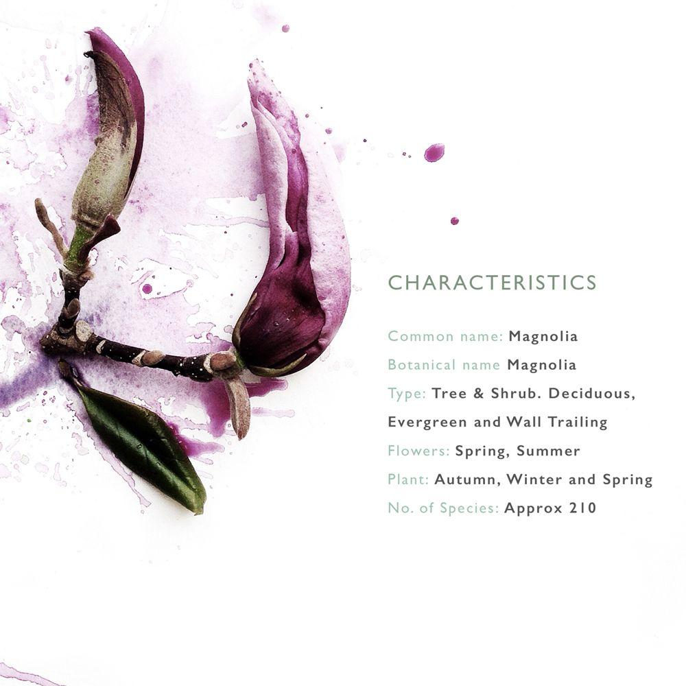 The Language Of Flowers Magnolia Gstc Blog Posts Flowers
