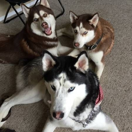 Pin On Lost Dogs Mi