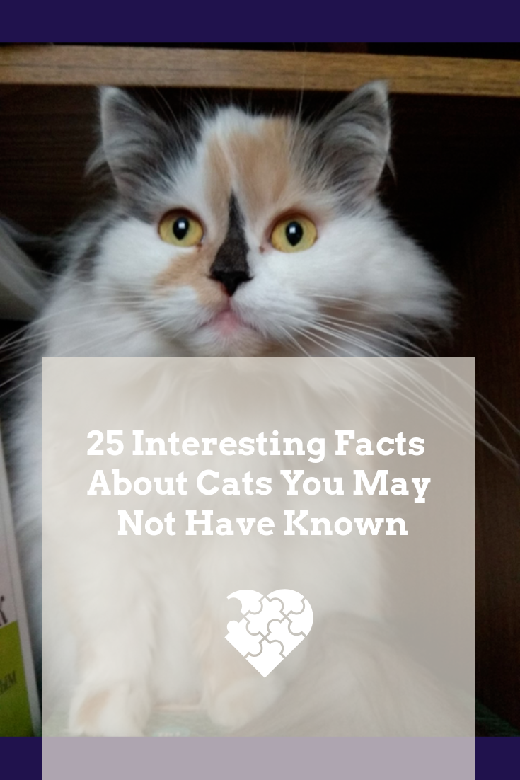 25 Interesting Facts About Cats You May Not Have Known