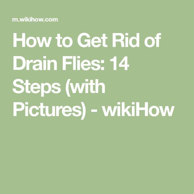 Get Rid Of Drain Flies Fly Infestation