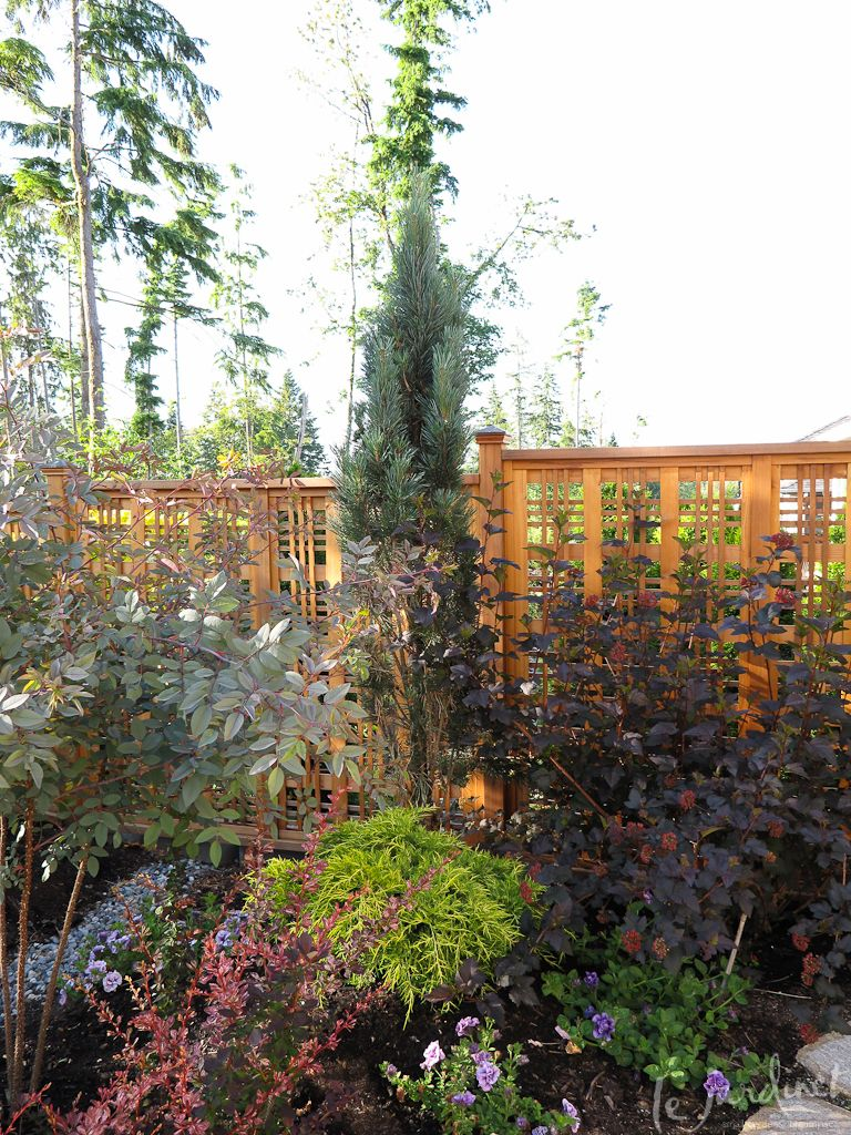 Skinny Conifers For Tight Spaces Conifers Backyard 640 x 480