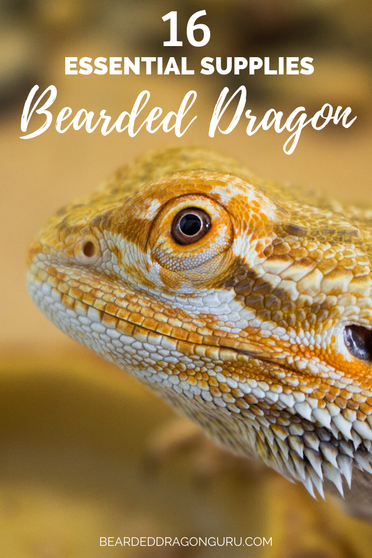 16 Essential Supplies for Bearded Dragon Tanks in 2020 ...