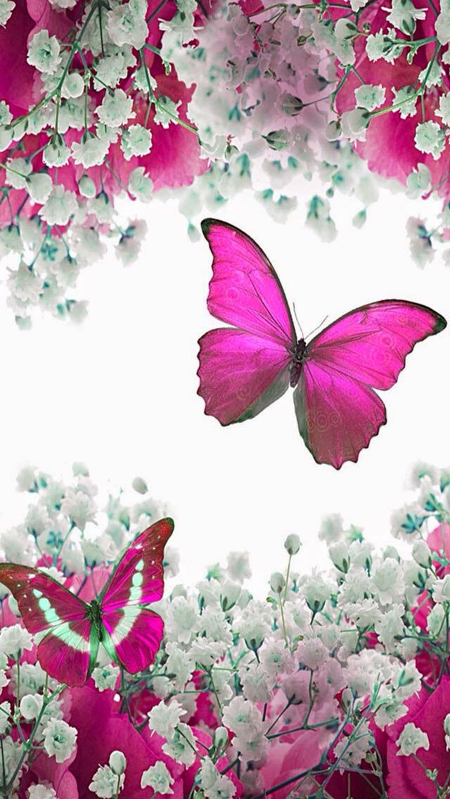 Photo Wallpaper Butterfly Art Butterfly Wallpaper Butterfly Wallpaper Backgrounds Beautiful wallpaper background pictures