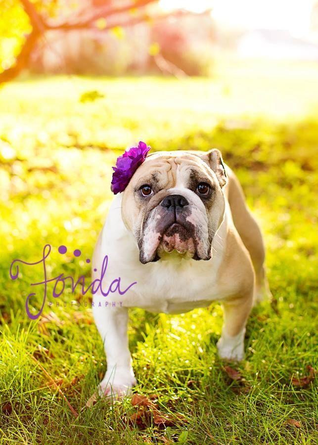 Pin Ot Polzovatelya Lyutaya Naprimer Na Doske I Want This Dog
