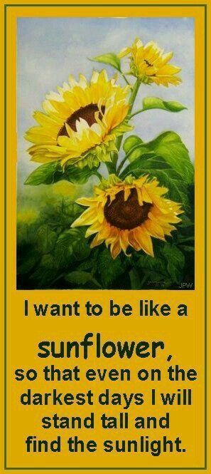 Pin by Ann Weisleder on Sunflowers | Sunflower quotes ...