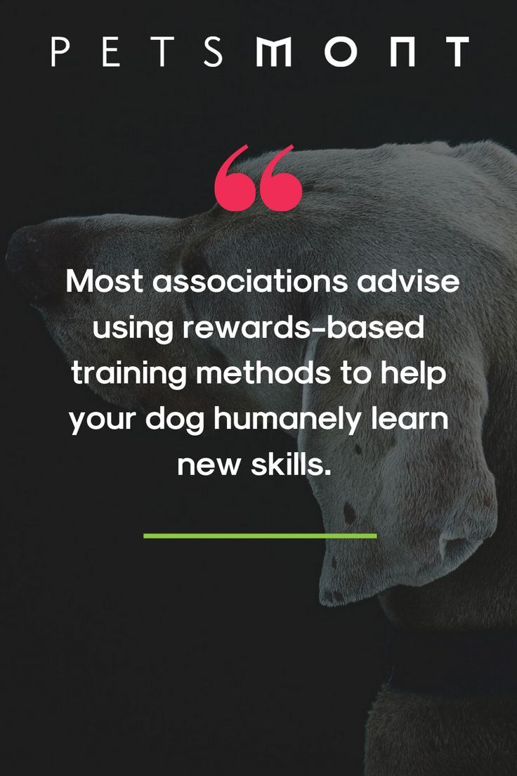 It S National Train Your Dog Month Tips For Puppy Training In 2020