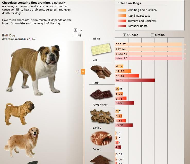Interactive Chocolate Chart Effects On Dogs By Weight And Amount Of Chocolate Consumed Canine Health Animal Photo I Love Dogs