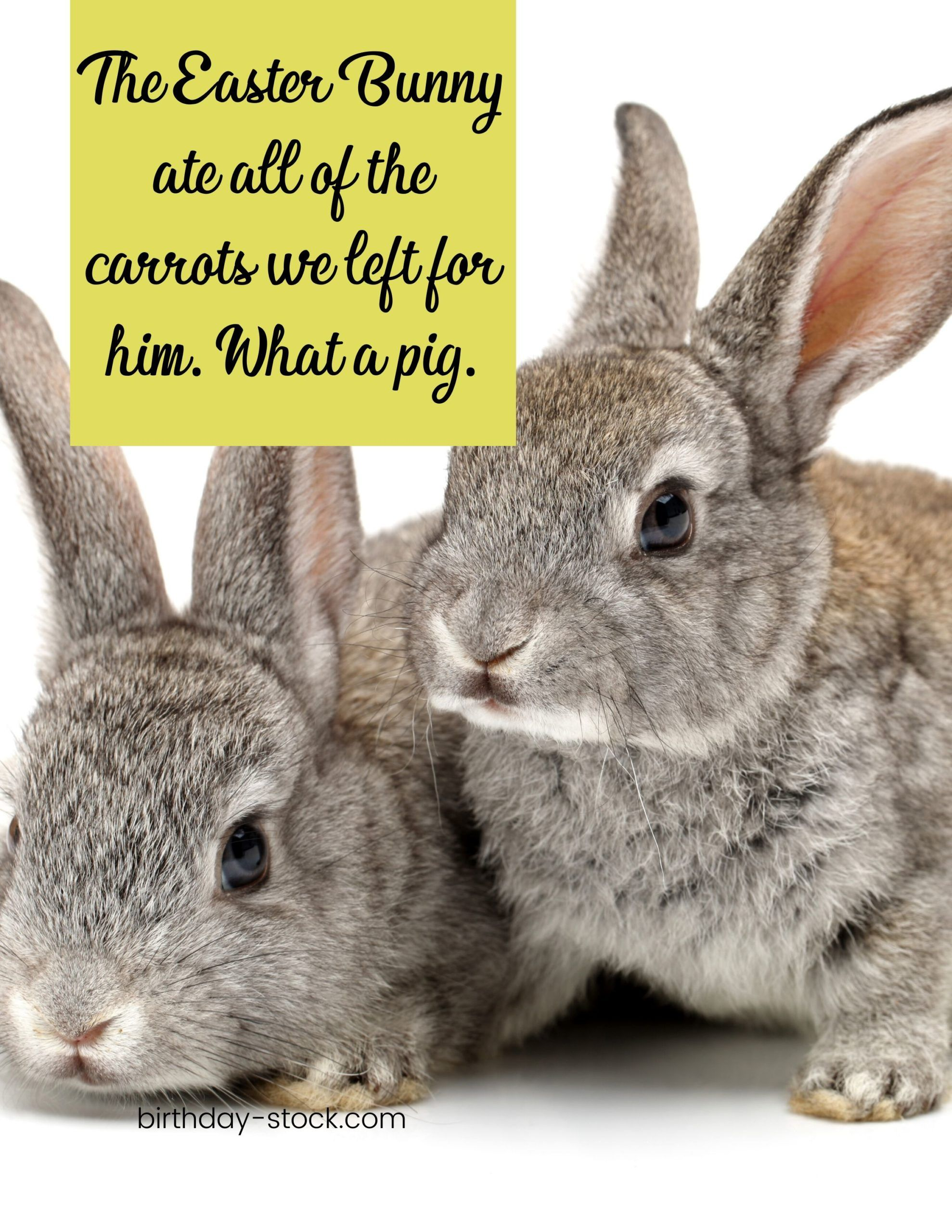 Happy Easter Funny Images Happy Easter Funny Images Happy Easter Funny Easter Humor