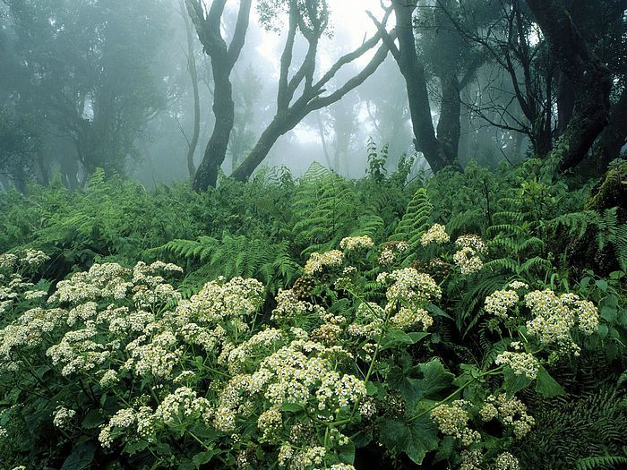 Spring in the Canary Islands, Spain
