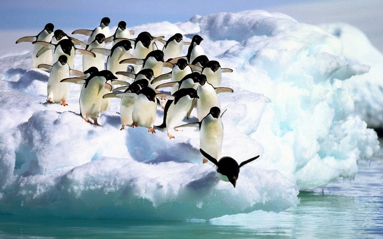 Penguin Wallpapers HD Pictures Images Free 1600x1200 Baby