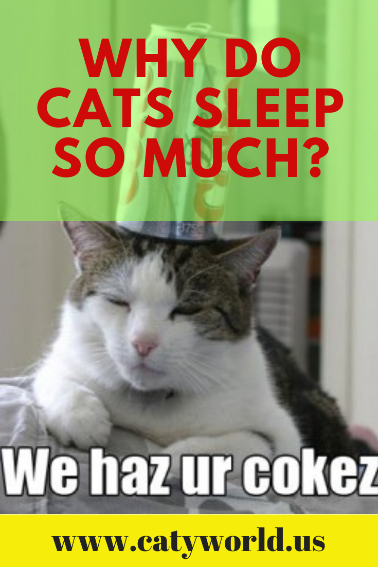 Most Cats Sleep Around 16 Hours A Day With Kittens And Seniors Snoozing Even Longer Than That Cat Sleeping Cat Care Cats