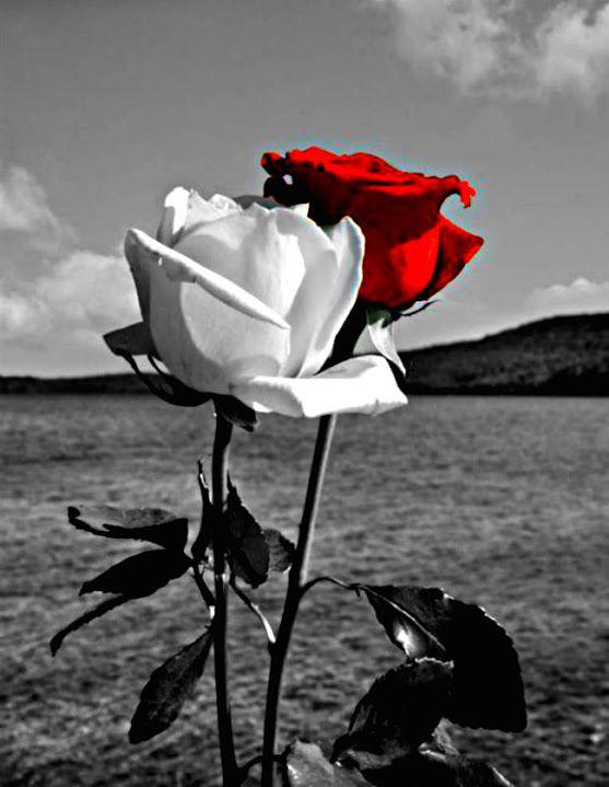 Открытки черные белые красные