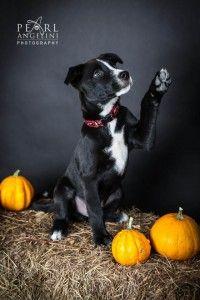 High Five Macintyre Winnipeg Pet Photography Dogs Puppies