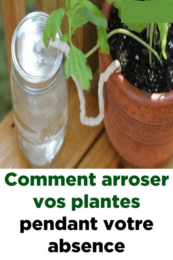 Comment Arroser Vos Plantes Pendant Votre Absence Jardinage