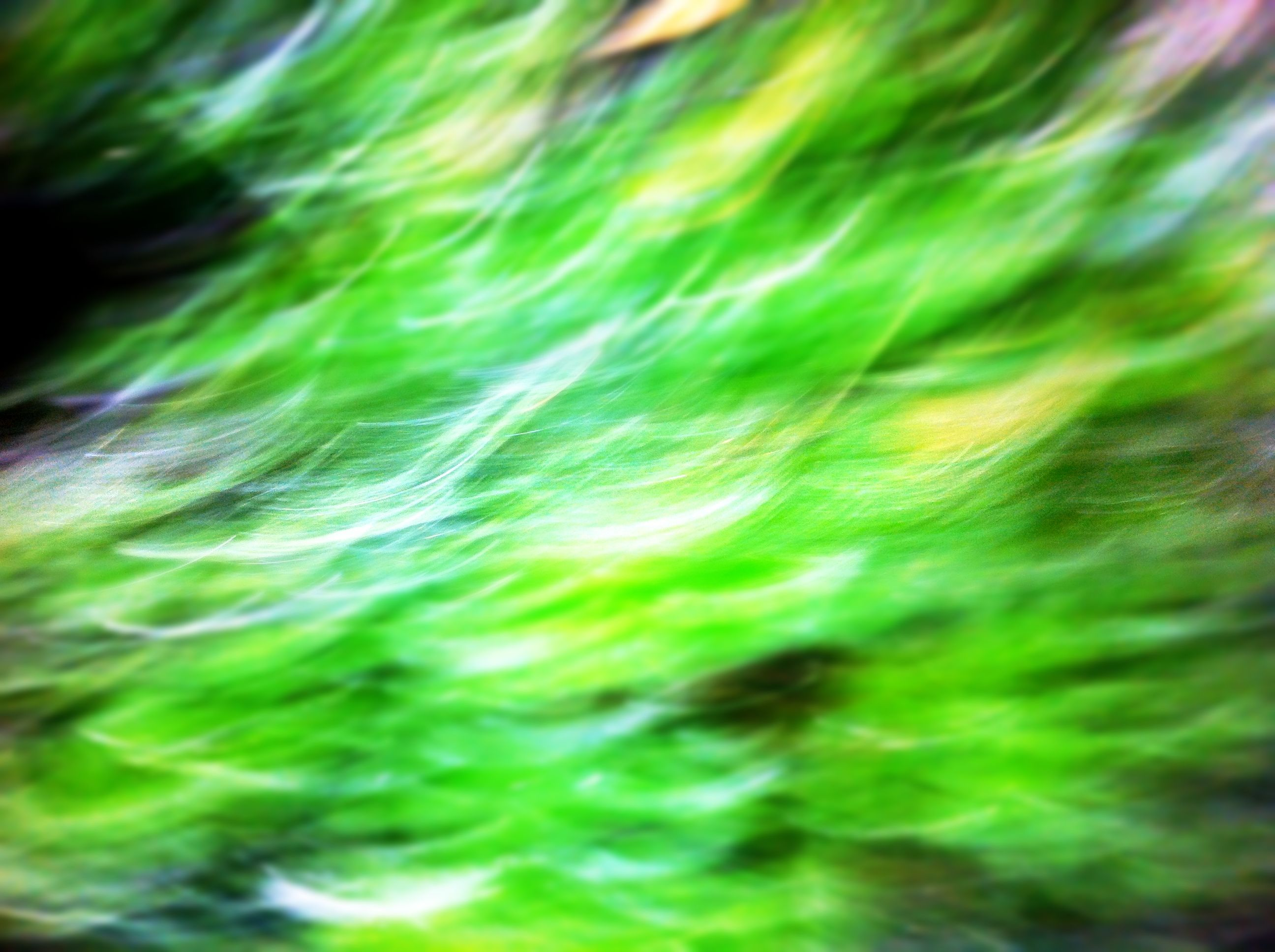 I just love green grass and wanted to show how much energy and light there is in it