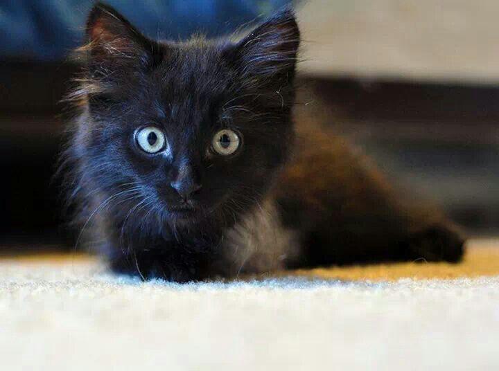 My tri-pawd kitty, Bran