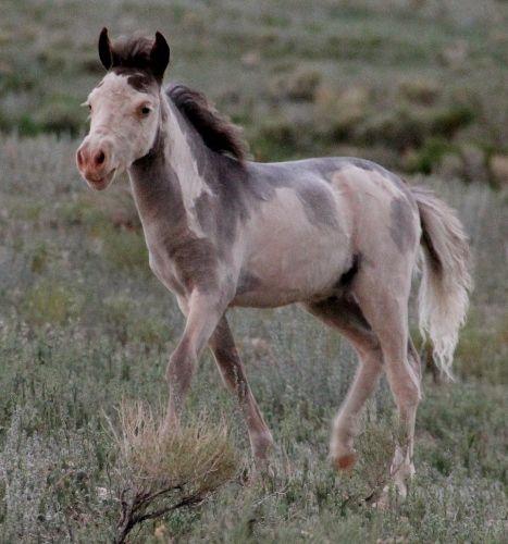 Sales Barn Horses Pinterest Glass Glue And Horse