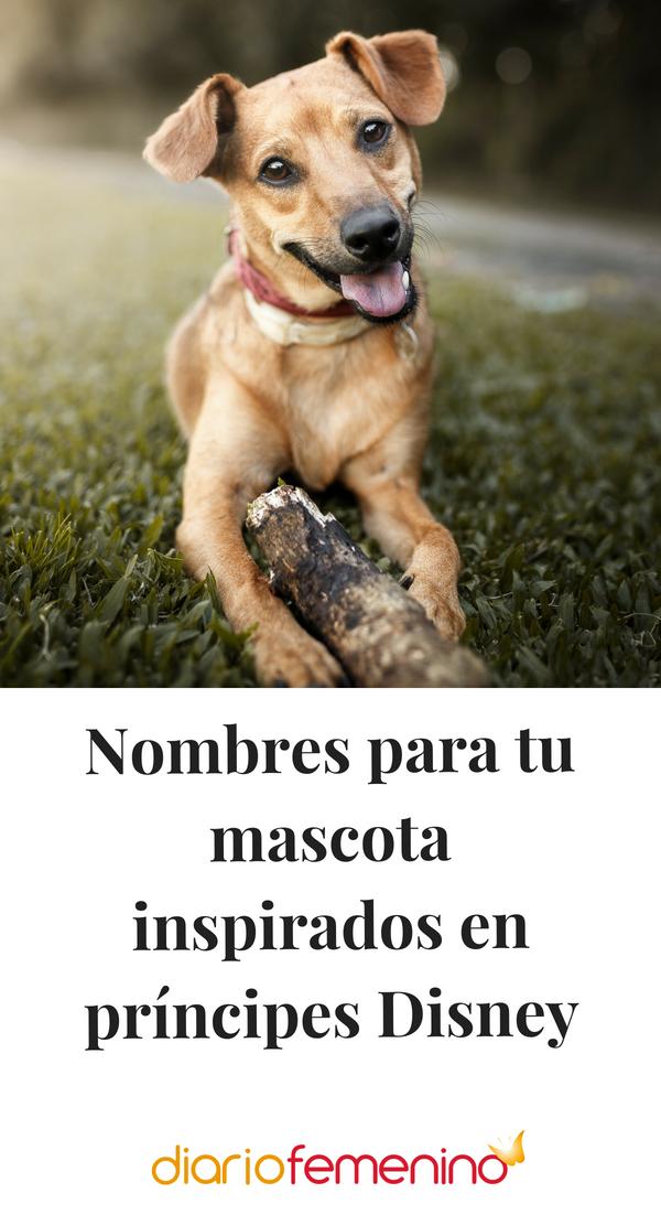 Nombres Para Tu Mascota Inspirados En Príncipes Disney Nombres De Perros Nombres De Perro Hembra Nombres Para Perros Pitbull
