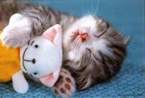 VISIT: http://look-how-cute-kittens.blogspot.com/