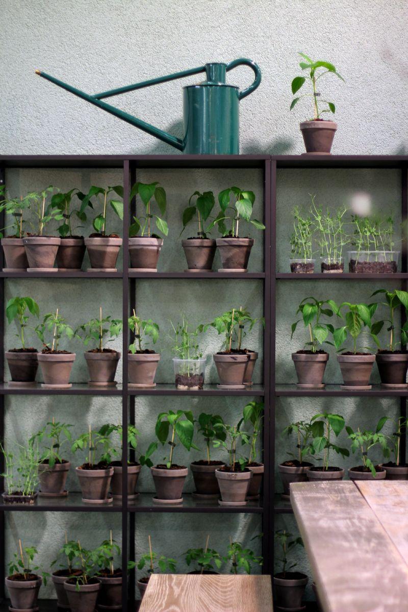 Epingle Par Le Coin Jardin Sur Retro Hype Planter Des Fleurs Jardinage Interieur Petits Jardins