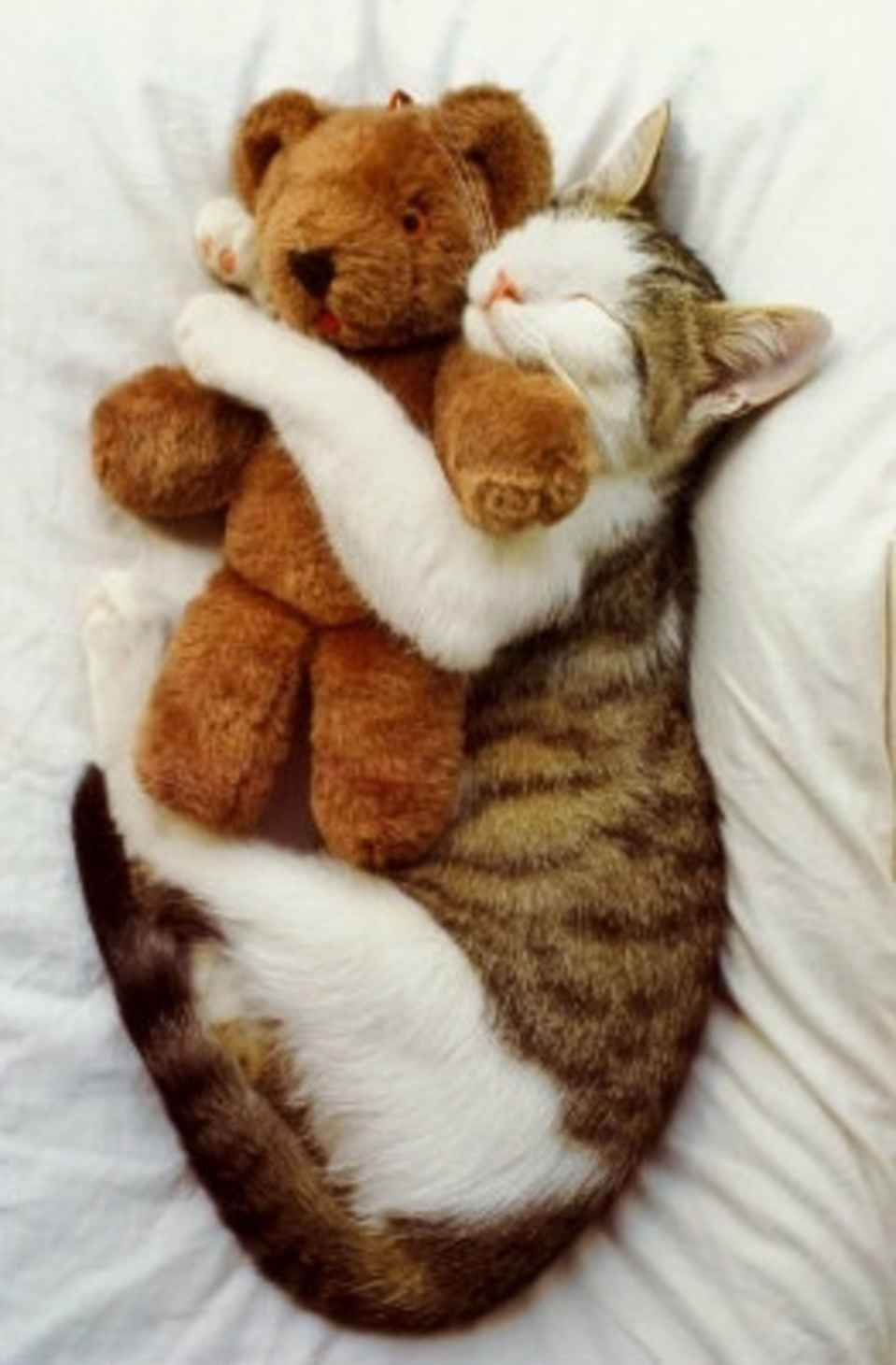 21 Adorable Cats Who Just Want A Hug Cute Animals Kittens Cutest Cat Sleeping