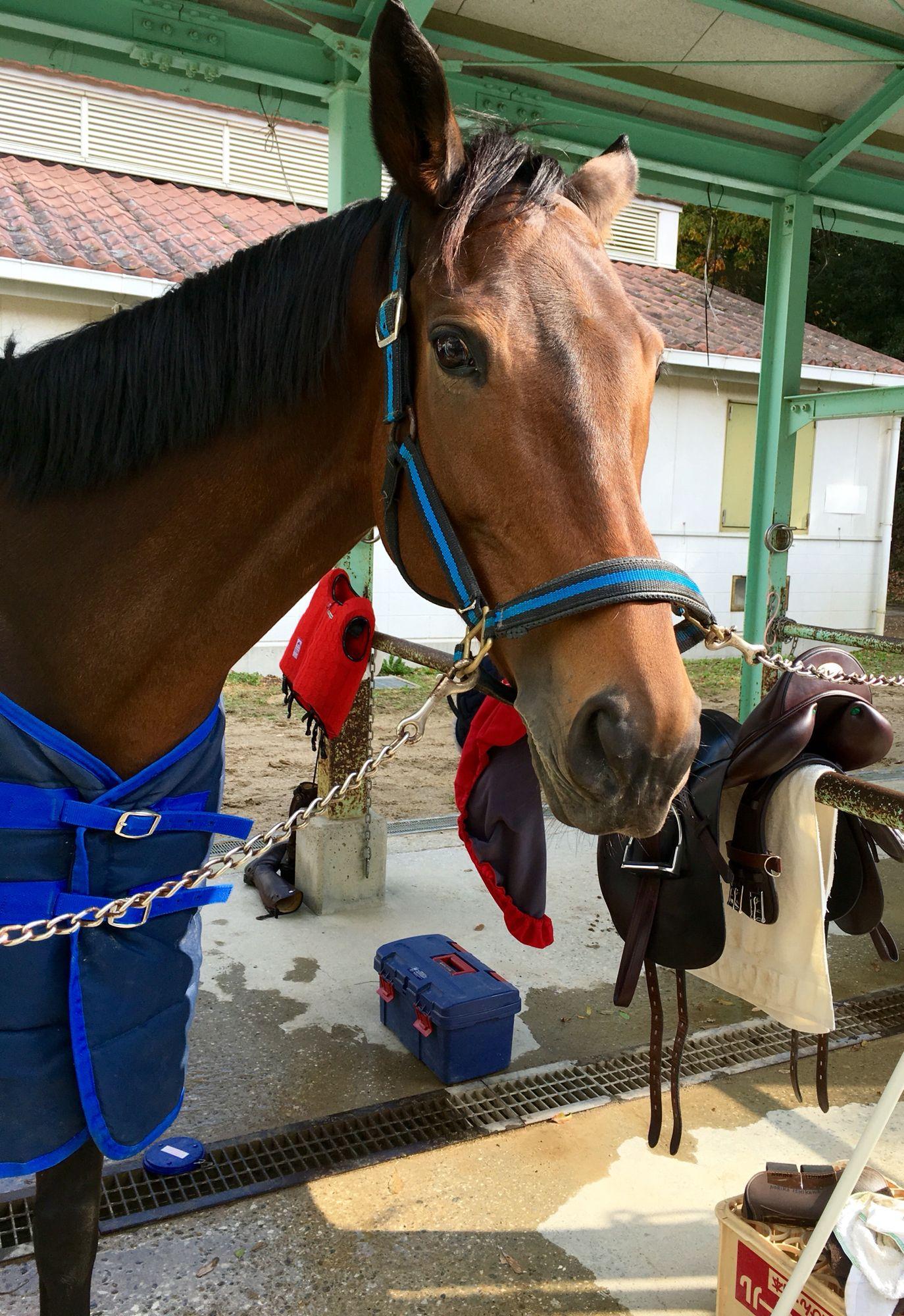 La fluer dalle 11:00 al 4 dicembre 2015 per il corso Trotto con istruttrice Kashihara ed altri 6 cavalli; Anderico, Bambina, Regina, Pocky, Ramses…