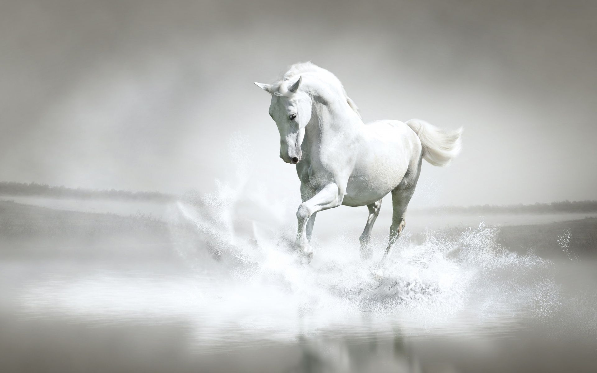 404 Not Found Horses Horse Water Horse Wallpaper