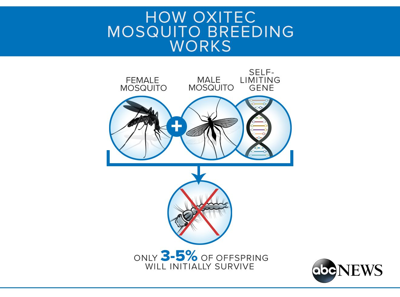 Fighting Zika in the US: The Battle Over GMO Mosquitoes. How one island in the the Florida Keys could change the way we fight mosquito-borne diseases.  The decision whether to release genetically engineered mosquitoes could change history. People speaking out in opposition have stalled the release. There have been no environmental studies and we have no idea of the long term ramifications. Seems like a total disregard for safety in  the name of greed. How did they get this far? KEEP…