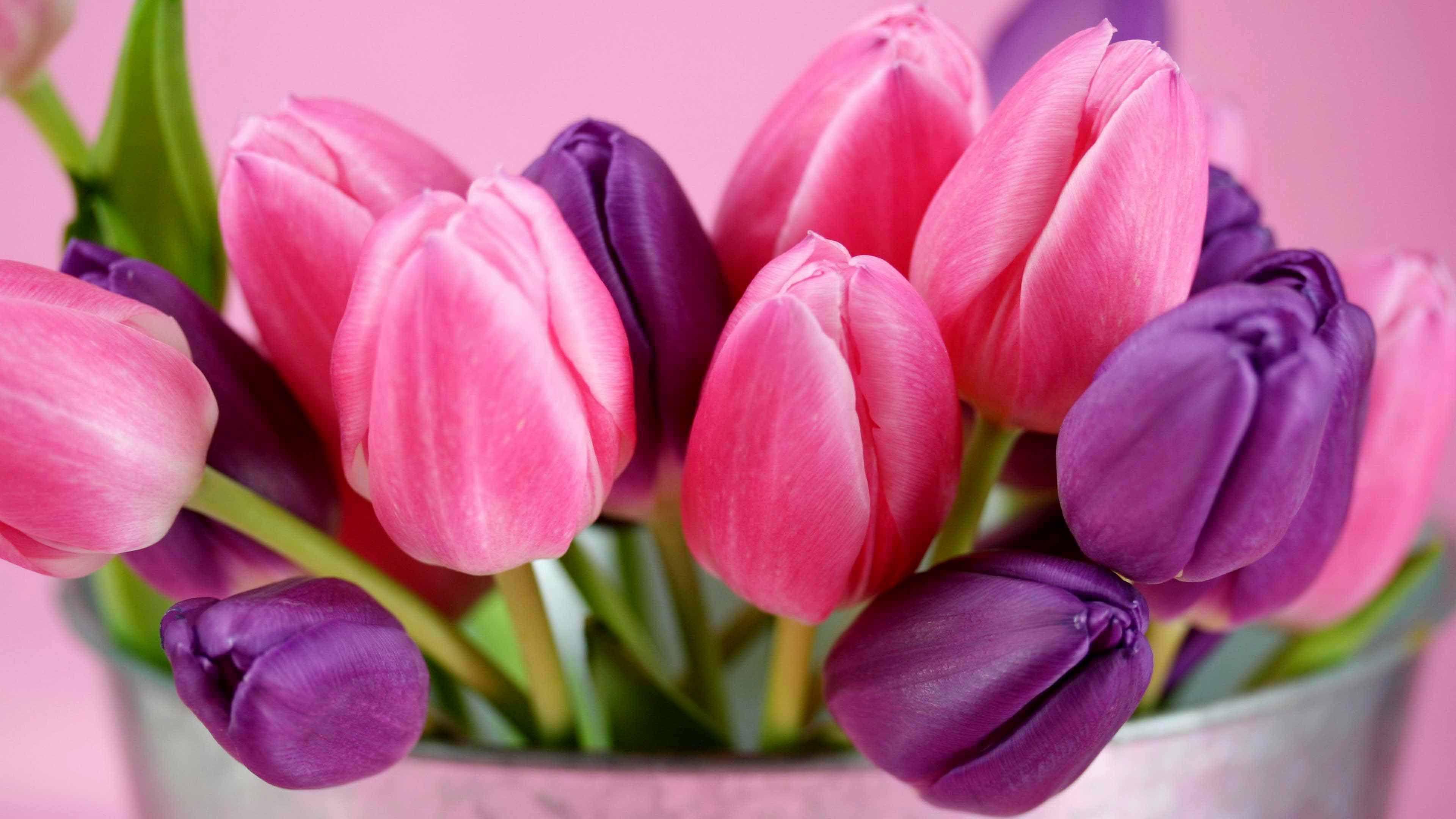 тюльпаны фото: 22 тыс изображений найдено в Яндекс.Картинках