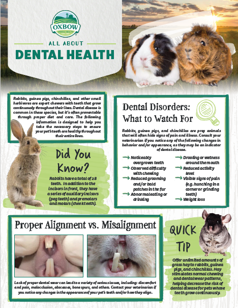 How To Prevent Your Dog From Getting Periodontal Disease   Furbo Dog Camera
