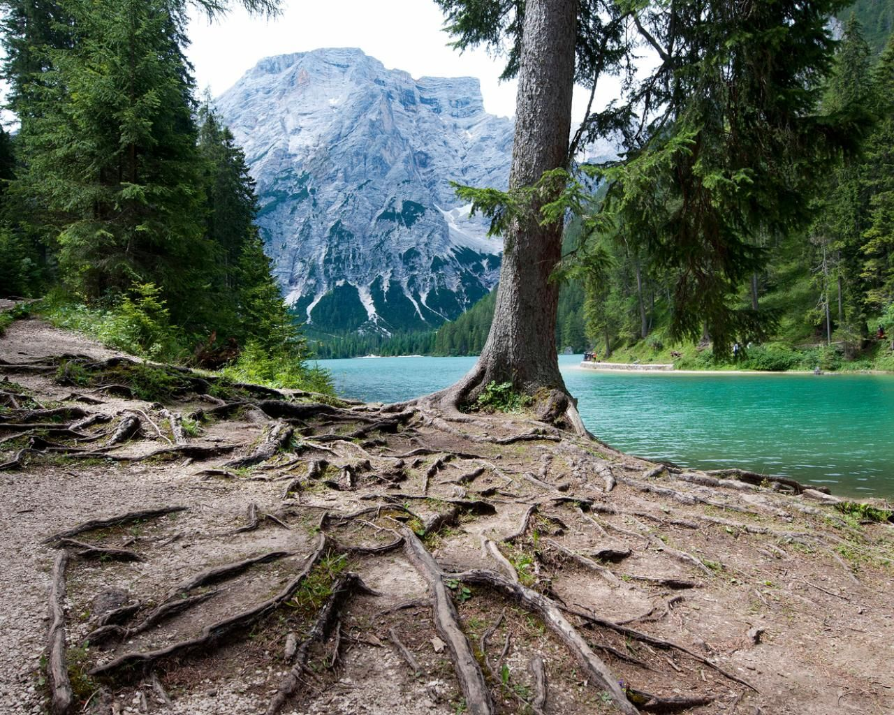 lake_mountains_forest_trees_the_roots_italy_1280x1024_hd-wallpaper-358290.jpg (1280×1024)