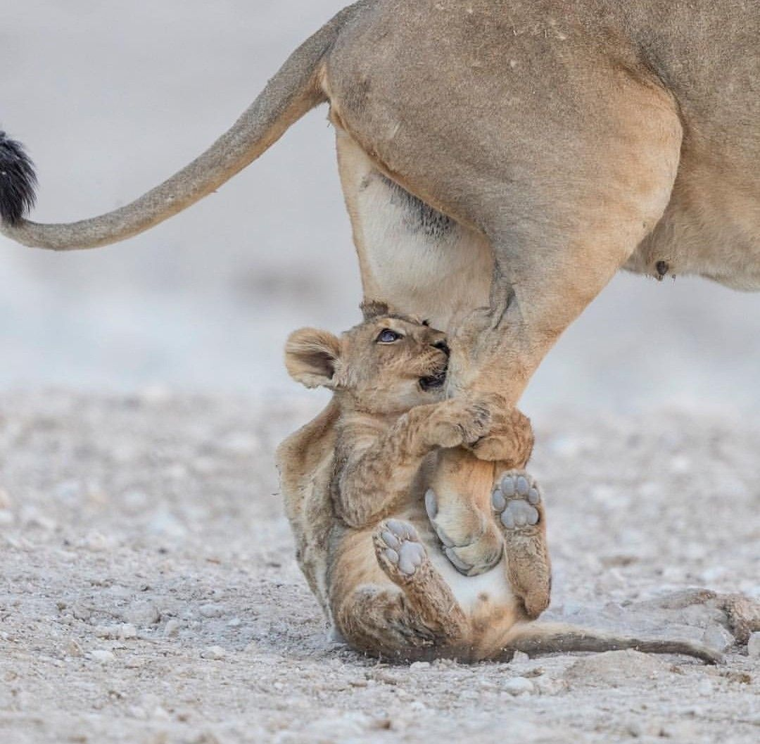 Come On Mum Lets Play Cute Animals Animals Beautiful