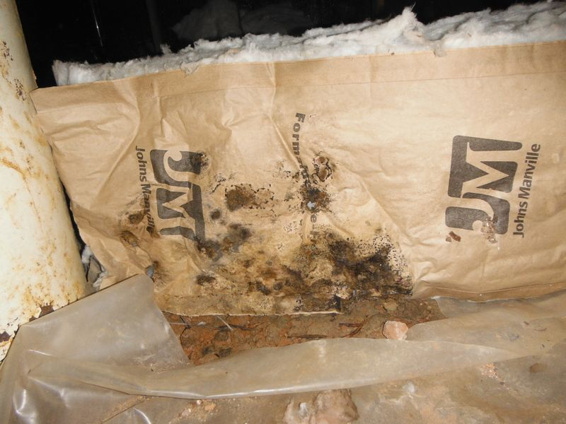 Mold In The Paper Of Faced Insulation In A Crawlspace Faced Insulation Foam Insulation Spray Foam Insulation