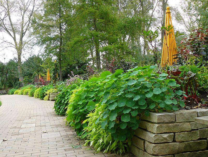 9 beautiful edible landscape plants for a garden where form meets