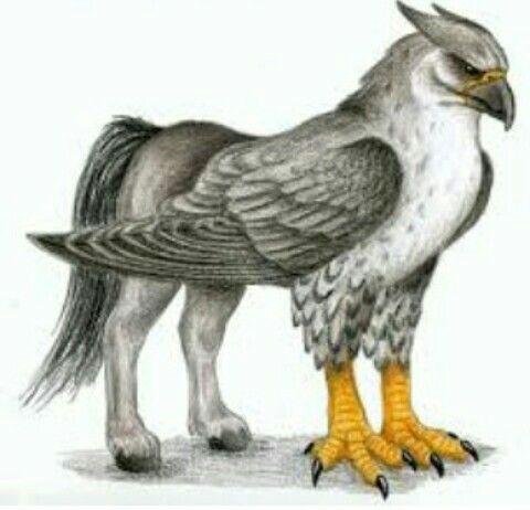 Hipogrifo Mythical Creatures Mythical Creatures Fantasy Mythological Creatures