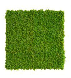 Pflanzenbild Islandmoos quadratisch #bepflanzung innenraum, Mooswand aus Islandmoos | im Greenbop Online Shop kaufen #dunkleinnenräume