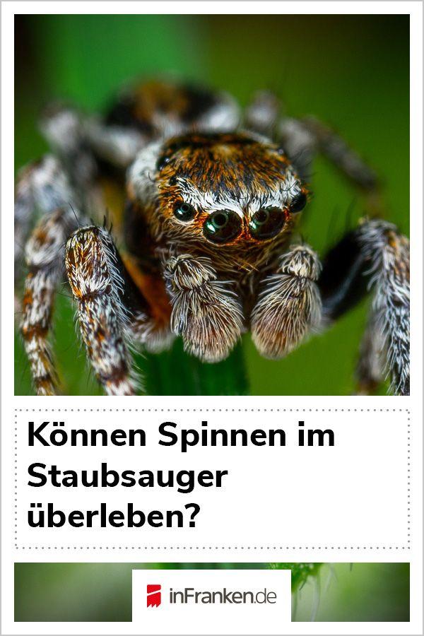 Können Spinnen Im Staubsauger überleben