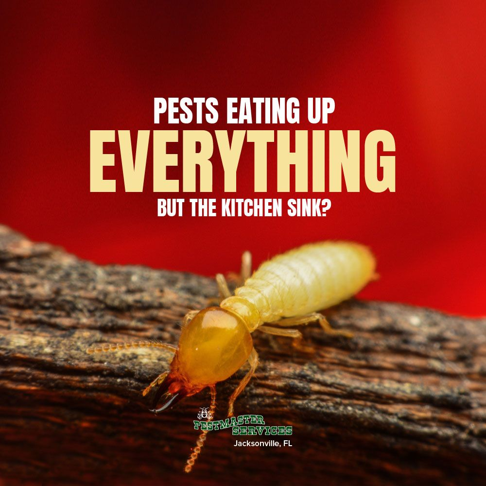 termites are a hungry bunch with the capabilities to