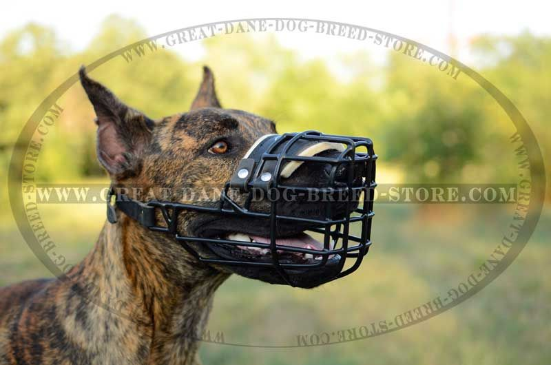 Rubber Covered Wire Muzzle For Great Dane Great Dane Dogs Great