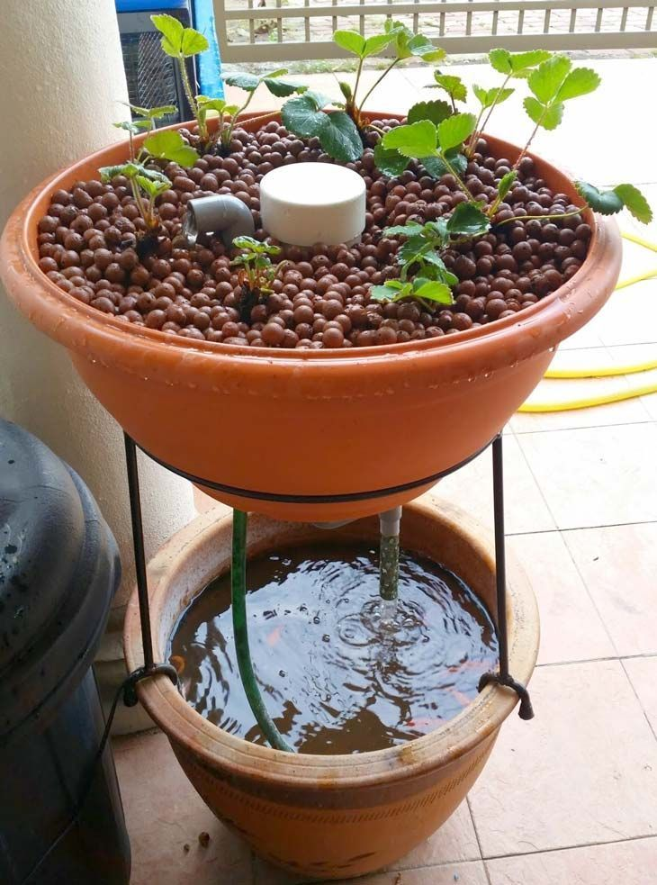10 awesome diy aquaponic builds to inspire you planters for Hydroponics aquaponics