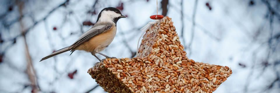 Jules Loft Wild Bird Feeders Minnesota Love These Bird Seed Creations Buy Them April 6th Www Minneming Wild Bird Feeders Minnesota Birds Bird Seed Feeders