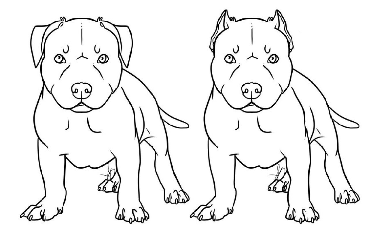 Pitbull Coloring Pages For Dog Lovers Pitbull Drawing Puppy