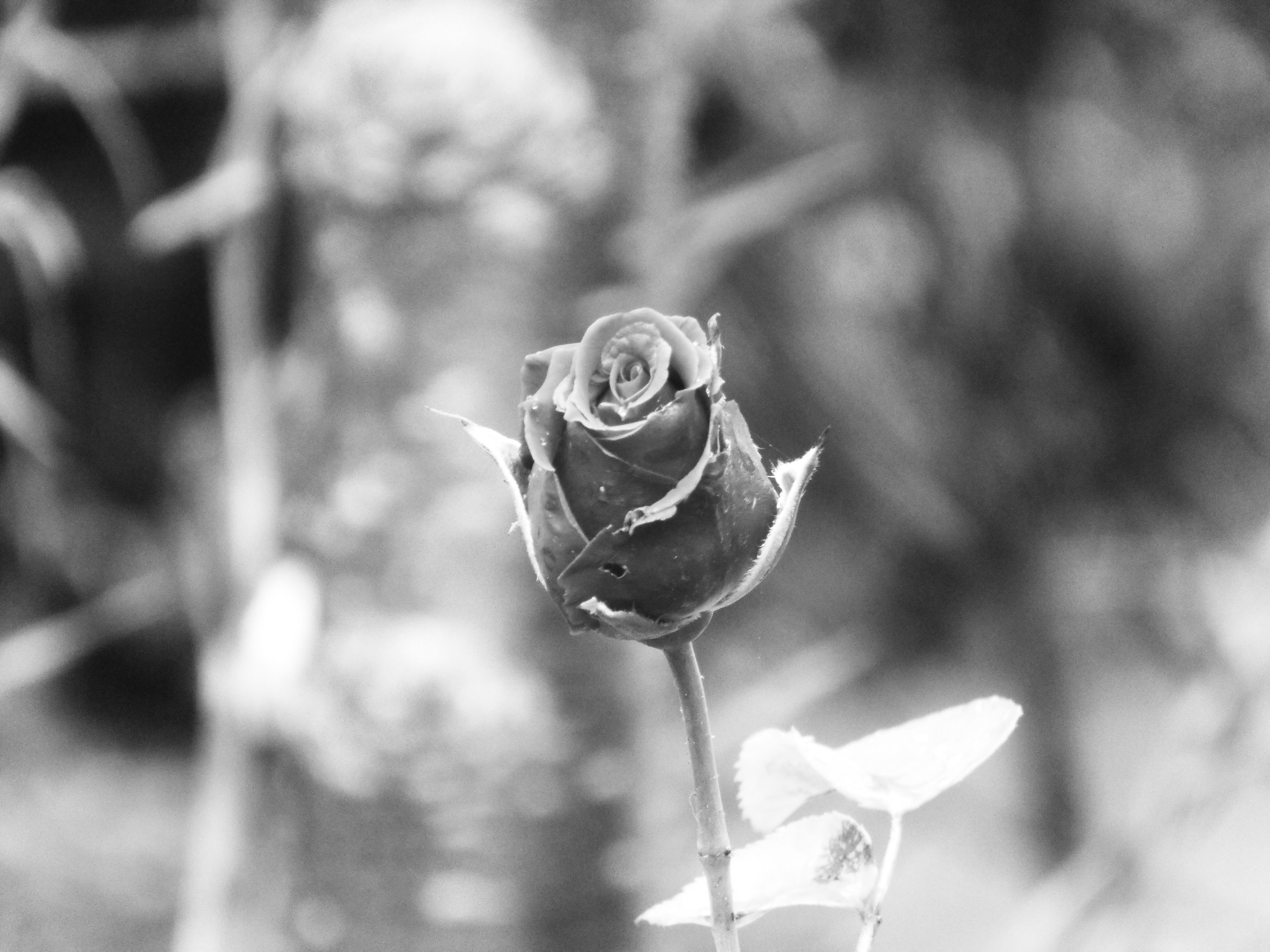 #photography #photographylovers #photographysouls #photographyeveryday #photographylover  #photographylife  #photographyy #photographylove #photographyaddict #photographydaily #photographyisart #photographyaccount  #photographyday #photographynature #photographysoul #photographyblog #photography101 #exmoor